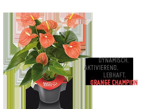 OrangeChampion