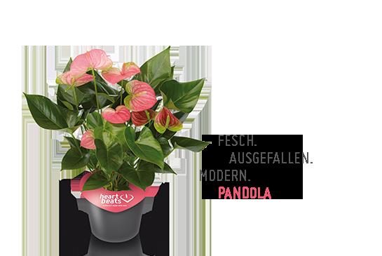 Pandola