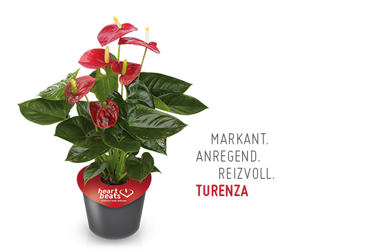 Turenza
