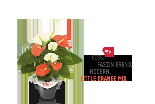 LittleOrangeMIX